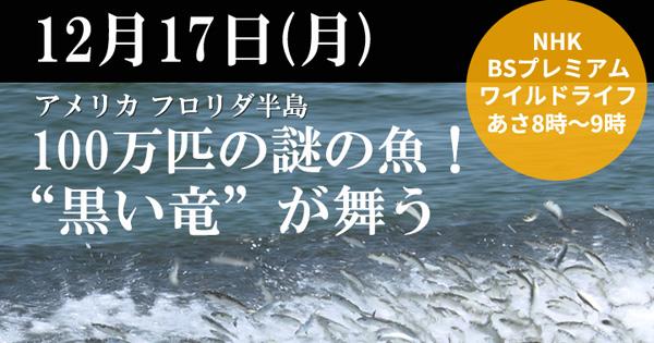 NHK「ワイルドライフ」 100万匹の謎の魚!?