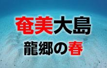 現地ガイドおすすめ 奄美大島・龍郷の春
