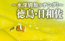 現地の海から~水深別魚ッチング!~ 徳島・日和佐