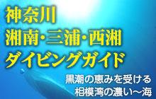 神奈川 湘南・三浦・西湘ダイビングガイド