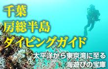 千葉・房総半島ダイビングガイド