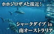 ホホジロザメシャークケージダイビング in 南オーストラリア
