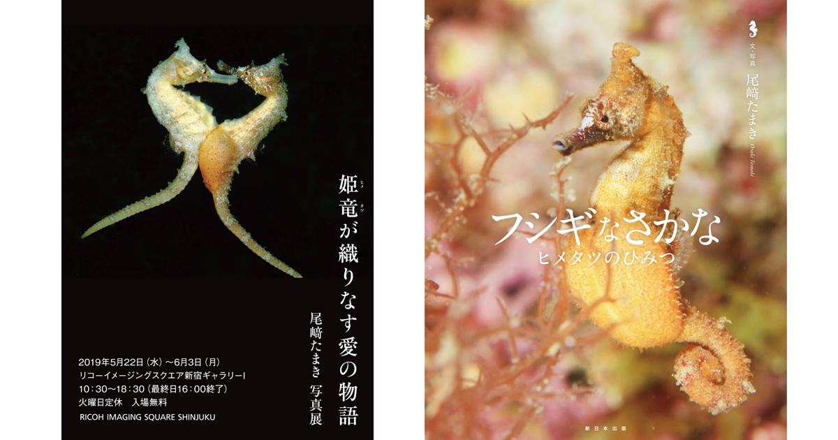 尾﨑たまきさん ヒメタツの写真絵本&写真展