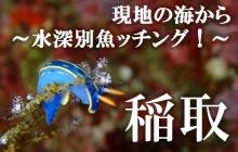 現地の海から~水深別魚ッチング!~ 稲取