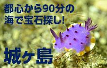 神奈川県・城ヶ島でウミウシだらけダイビング!