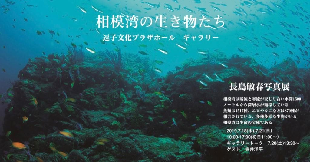 長島敏春さん写真展「相模湾の生き物たち」開催