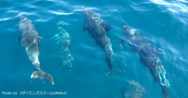 兵庫県・竹野で100頭ほどのイルカに大接近!