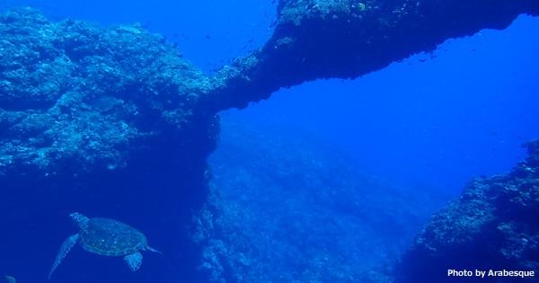透明度30m超え、生物も盛りだくさん!八丈島