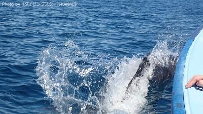 ボートのすぐ近くを泳ぐイルカ