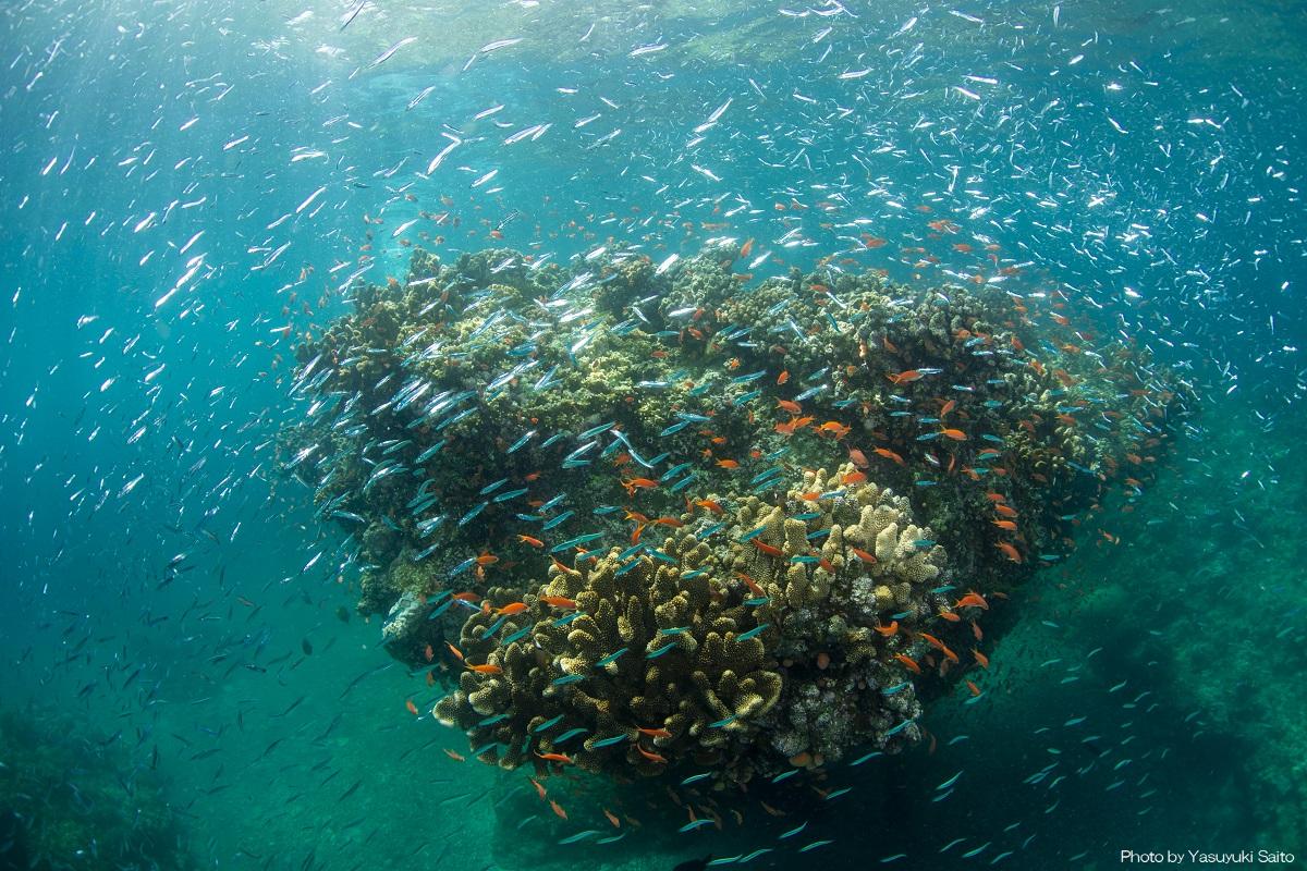美しい石垣島の海には撮影したくなる景色がいっぱい!「樹下美人」