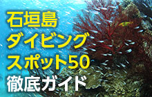 石垣島ダイビングスポット50徹底ガイド【マンタもサンゴも全部潜る!】