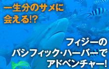 フィジーのパシフィック・ハーバーで一生分のサメに会う!