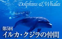 おさかな図鑑 イルカ&クジラの仲間