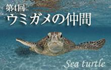 おさかな図鑑 ウミガメの仲間