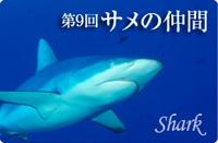 いきもの図鑑 サメの仲間