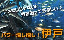 千葉県・伊戸はサメも魚群もウミウもパワー増し増し!