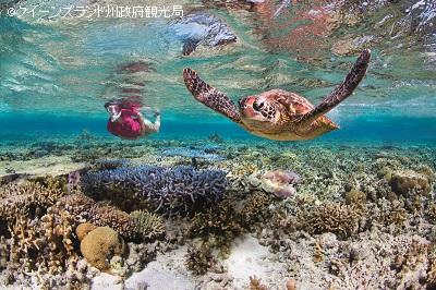 ウミガメなど多くの海洋生物が生息するレディ・エリオット島