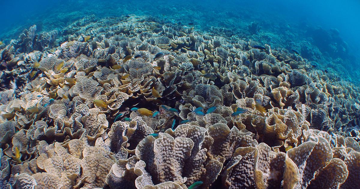 サンゴにも肌にも優しい日焼け止め5選