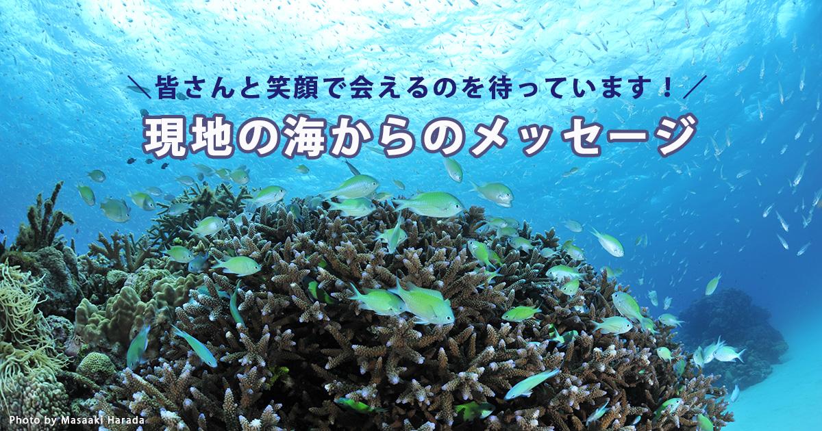 現地の海からのメッセージ動画