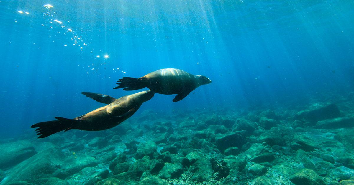大物に会える世界自然遺産の海 ラパス
