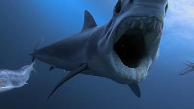 「対決!サメ vs 海の捕食者」©David Burt