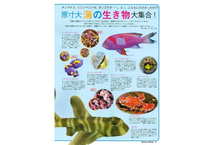 原寸大 海の生き物大図鑑