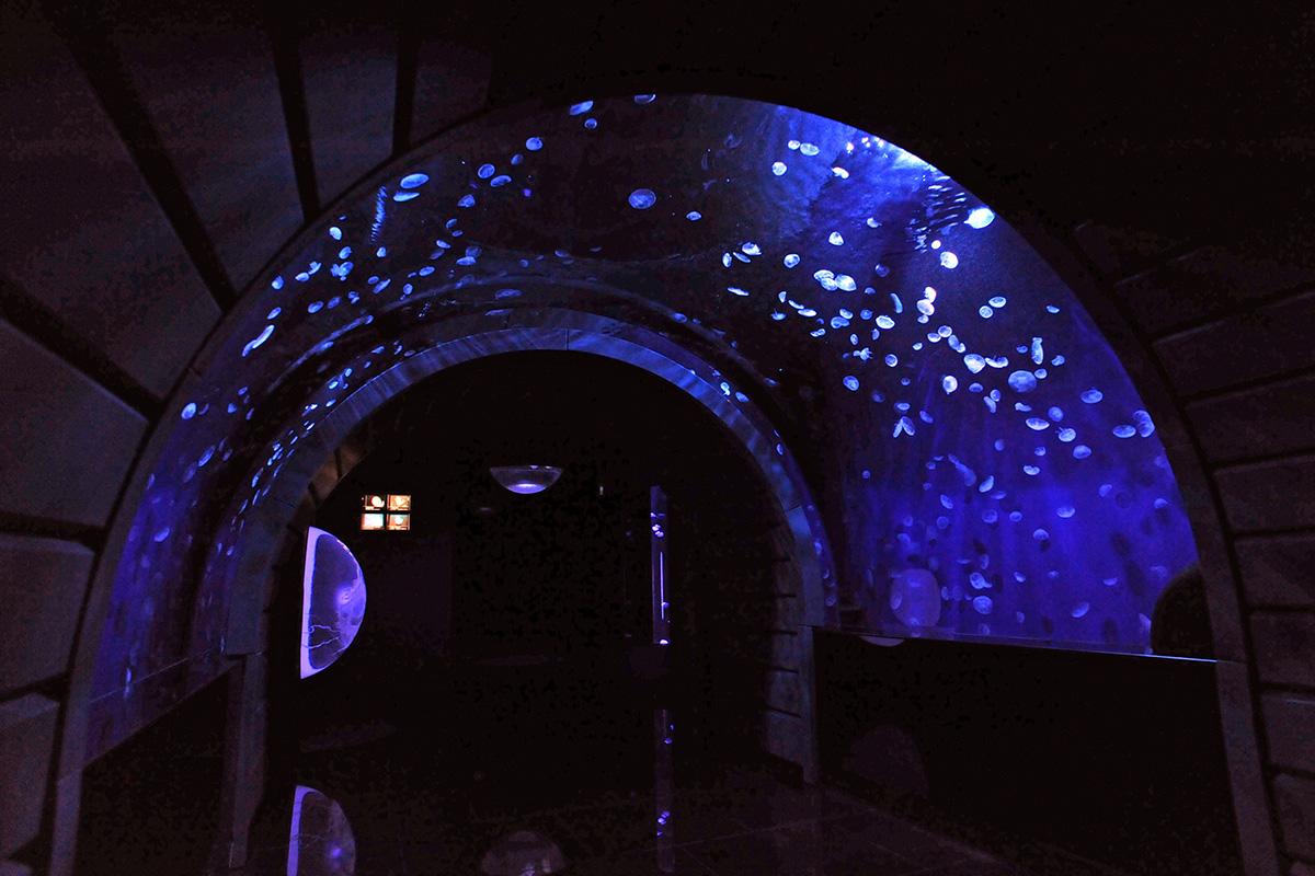 「クラゲトンネル」