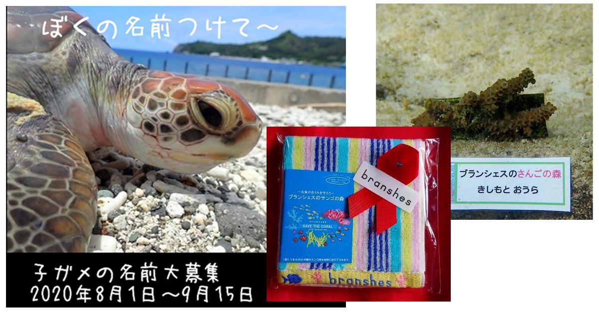 サンゴと海の生き物の絵&子ガメの名前大募集