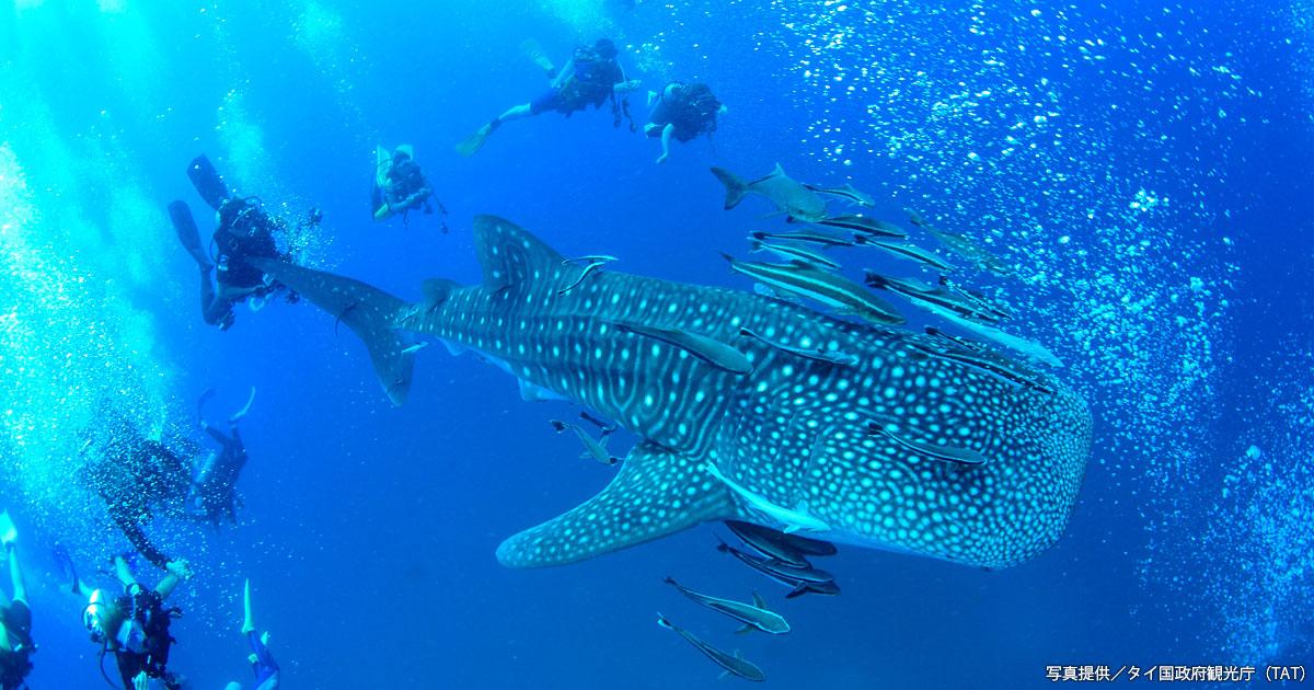 タイの2大海洋を潜る!その1タイ湾(タオ島・ラヨーンほか)