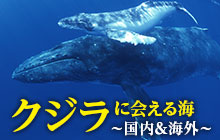 クジラに会える海まとめ【日本国内&世界各地を網羅】