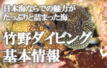 竹野ダイビング基本情報 ~日本海ならでの魅力がたっぷりと詰まった海~