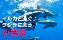 小笠原でイルカと泳ぐ♪クジラに会う♥