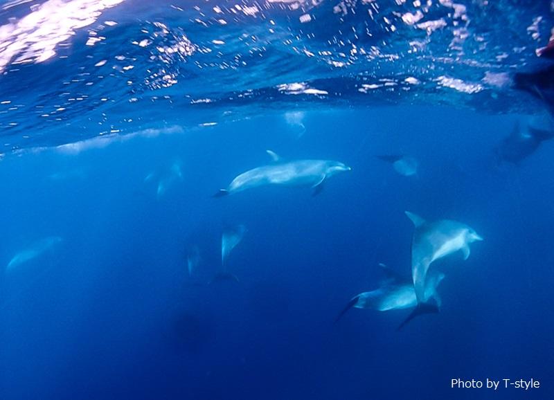 コンデジを海の中に突っ込み撮影。水面でも鳴き声が聞こえてたそう!
