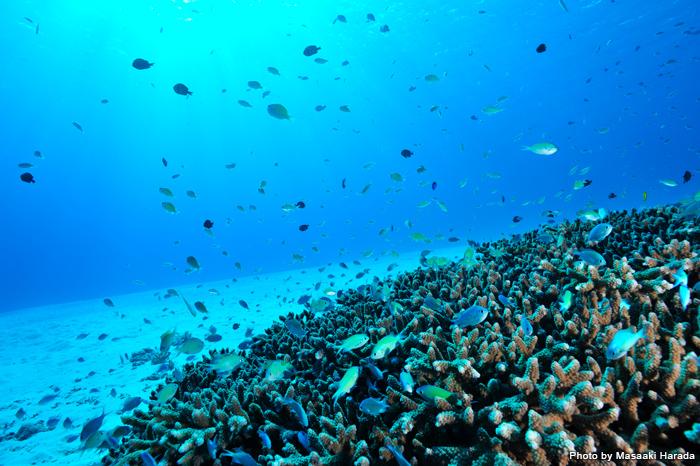 国内ダイビングエリア部門・沖縄エリアで現在3位なのが、ケラマ諸島の阿嘉(あか)島・慶留間(げるま)島。周囲には竜宮城を思わせるようなスポットがたくさんあります