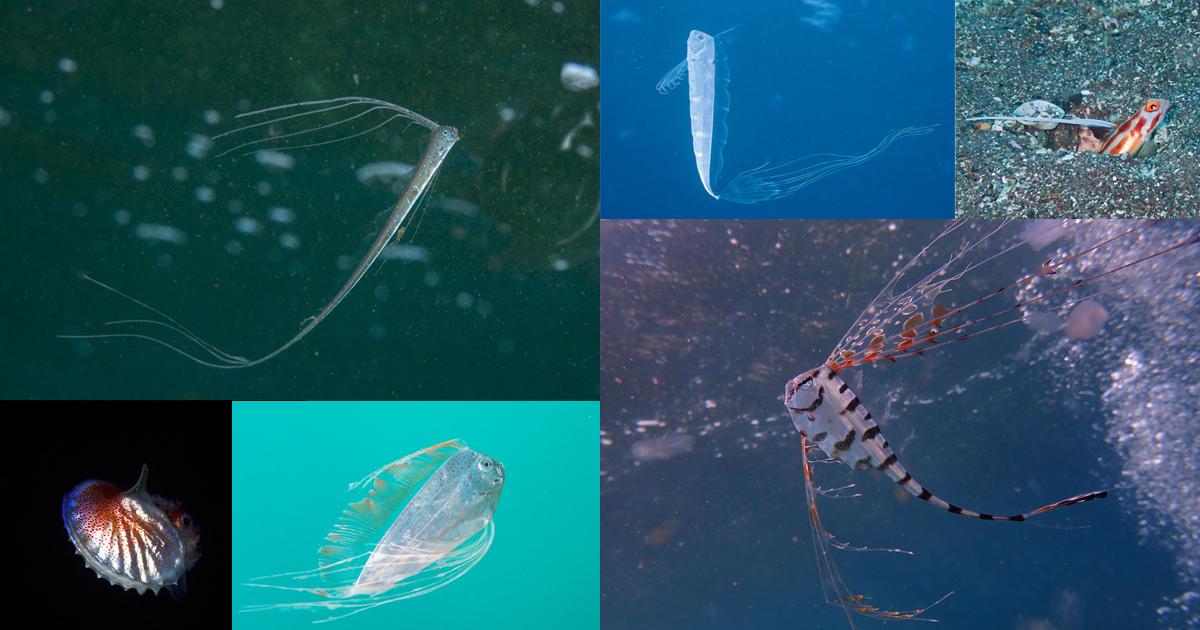 連日の深海魚にレア生物で大フィーバー!?大瀬崎