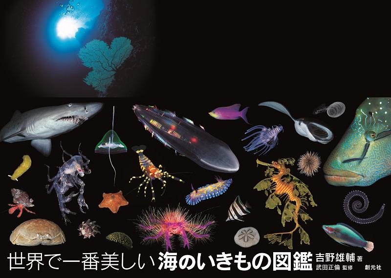 吉野雄輔さん著『世界で一番美しい海のいきもの』が最近の水中写真集としては絶好調