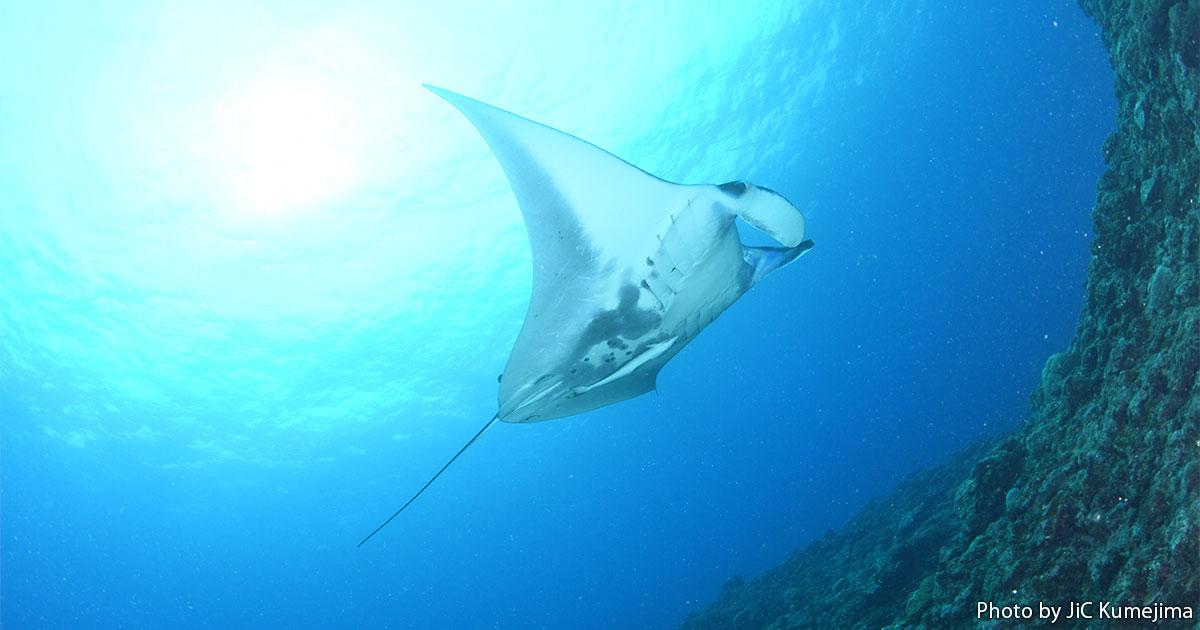 冬の久米島で大物狙いのダイビングを楽しもう!