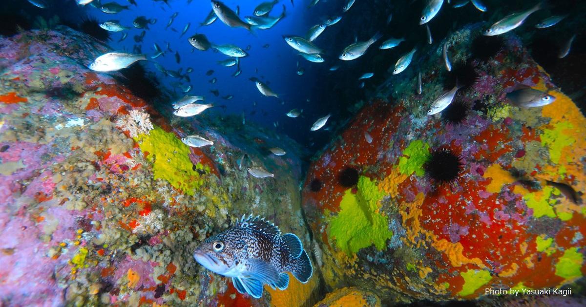水中写真家・鍵井靖章さんの水中写真展