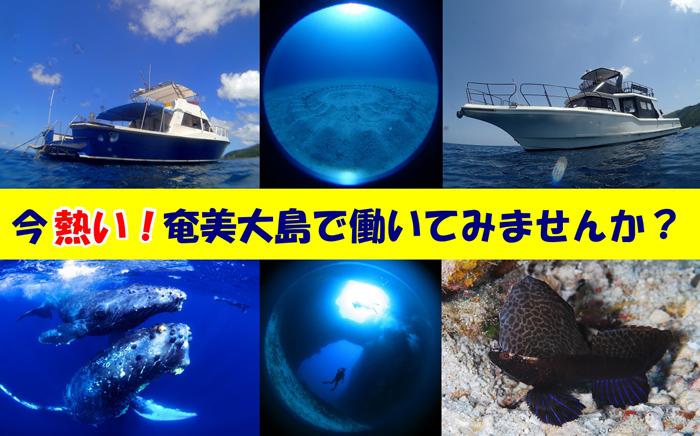 奄美大島北部・中部・南部を潜る奄美唯一のお店で、近年はトカラ列島にも足を延ばしてます。冬場はザトウクジラのウォッチングやスイムと驚きっぱなしの一年。