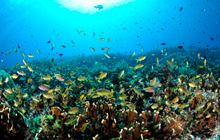 魚が密・密~!インドネシアの幸せの海・ラジャアンパット