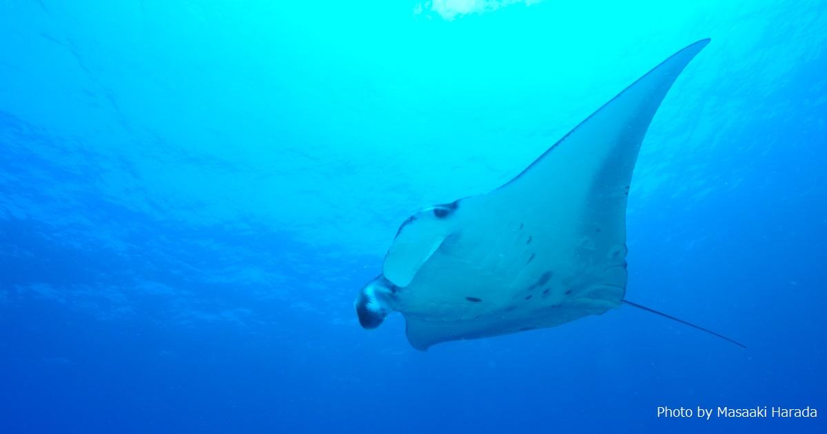 次に潜る海を探すなら「MD大賞」を参考に!