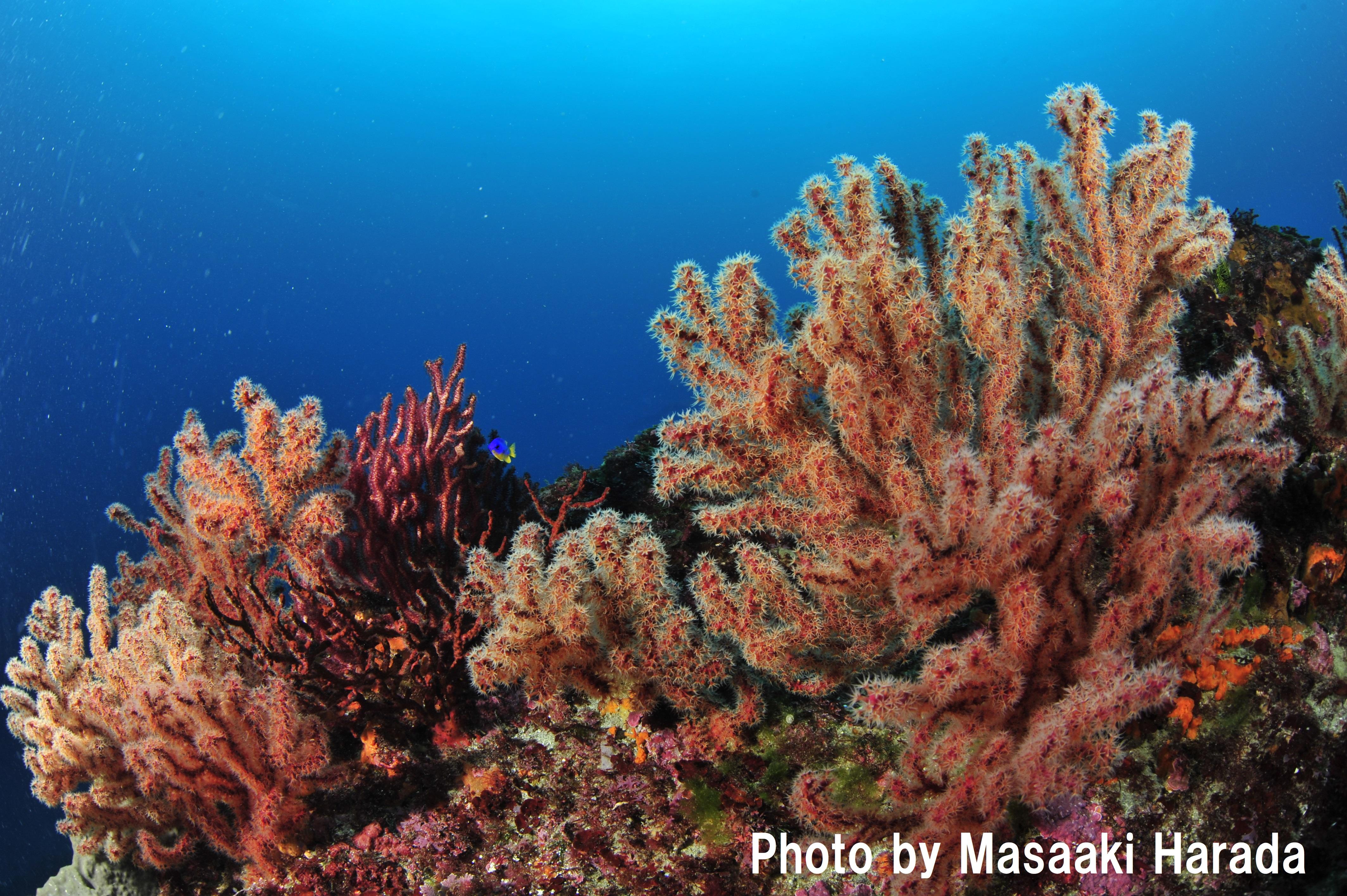 「国内ダイビングエリア部門ー伊豆半島」第1位には、初心者でも楽しめる地形スポット「富戸ホール」やたくさんのマクロ生物に会える富戸が選ばれました!