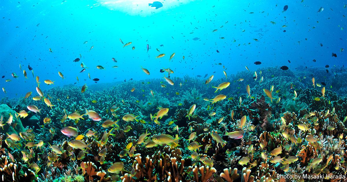 シリーズDive Indonesia Vol.1 魚が密・密~! 幸せの海ラジャアンパットRaja Ampat