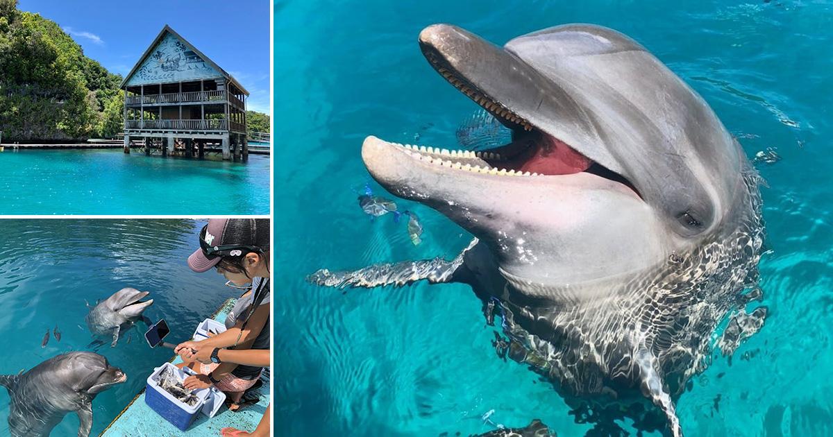パラオ《ドルフィンズパシフィック》オンラインでパラオとイルカの魅力を届けるプロジェクト