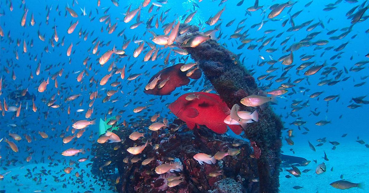 世界遺産の島は魚類も日本一!?屋久島