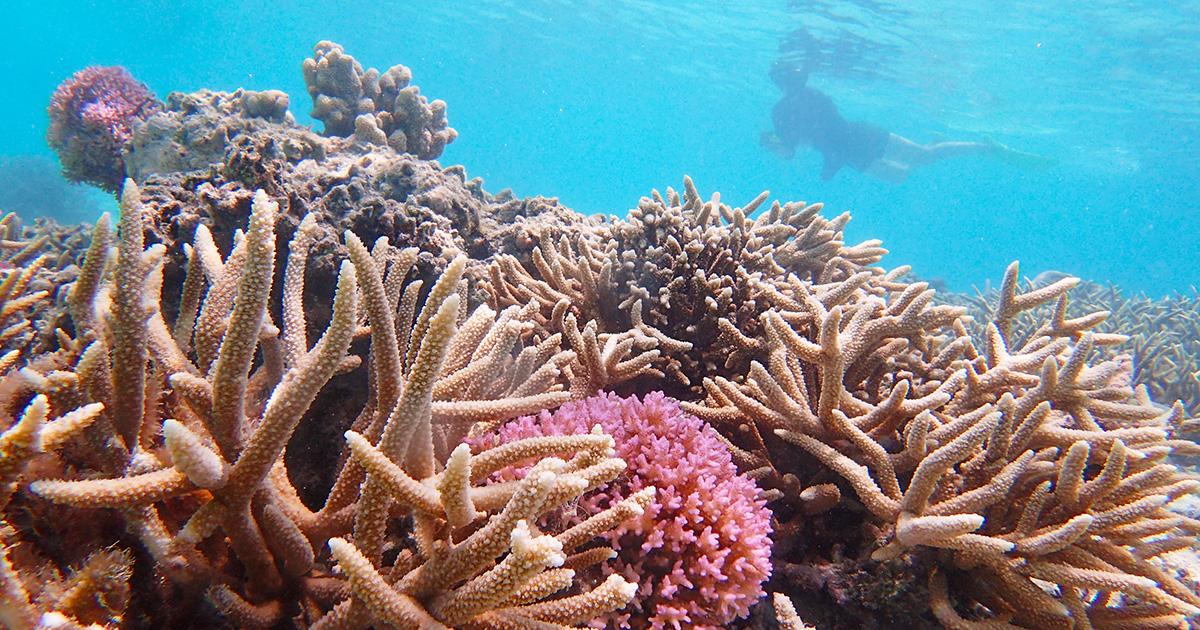 「サイパンの珊瑚の産卵観察プロジェクト」