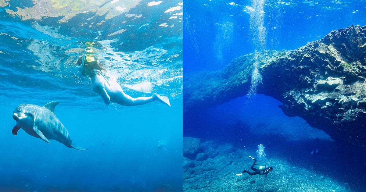 ダイビング+イルカ ダブルで楽しい! 三宅島ダイビング基本情報