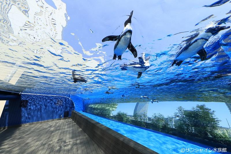 水族館が営業再開!2つの水族館の見どころをご紹介